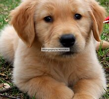 Cooper by Michiale