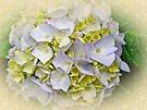 Variegated Lace Cap Hydrangea - Blue and Yellow by MotherNature