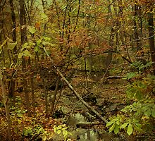 Unami Creek Feeder Stream in Autumn - Green Lane PA by MotherNature