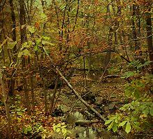 Unami Creek Feeder Stream in Autumn - Green Lane PA by MotherNature