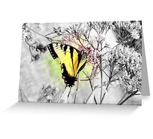 Damaged but not Broken (Black and White with Color Focus) Greeting Card