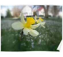 Daffodils with Street Scene (Soft Focus) Poster