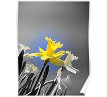 Daffodils in the Sky (Black and White with Color Focus) Poster