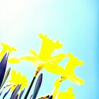 Daffodils in the Sky (Light) by CrystalFanning