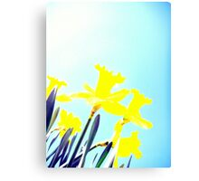 Daffodils in the Sky (Light) Canvas Print