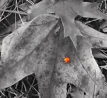 Lady in the Leaves (Black and White with Color Focus) by CrystalFanning