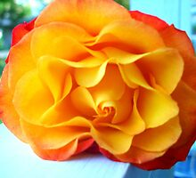 Rose on a Railing by CrystalFanning