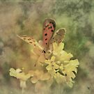 Butterfly by BeckyT
