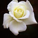 Pure by Rosalie Scanlon
