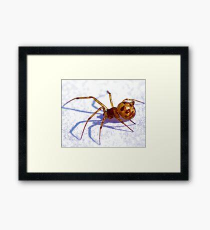 Creepy Spider Framed Print
