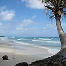 Palm Tree On The Beach by Jola Martysz