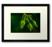 with hairs on her chinny chin chin Framed Print