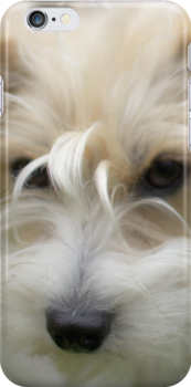 Puppy love for your iPhone by Martyn Franklin