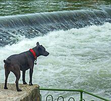 Cumbrian Weir-Wolf by Jamie  Green