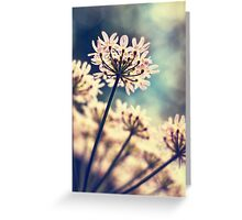 Queen Annes Lace flowers Greeting Card