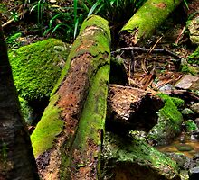 Green Log by Steve Bass