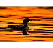 Loon at Sunrise Photographic Print
