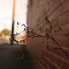 twig by Beau Williams