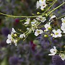 abeille au travail by Glonadine