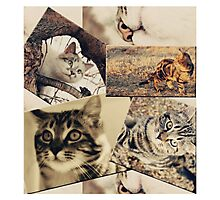 Cat collage Photographic Print
