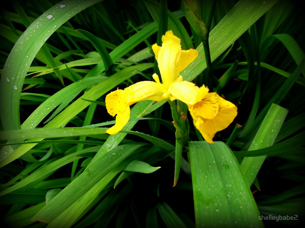 Mellow Yellow by shelleybabe2