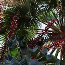 Tropical Blossoms, Bushes, Trees - Flores, Arbustos, Arboles Tropicales by Bernhard Matejka