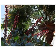 Tropical Blossoms, Bushes, Trees - Flores, Arbustos, Arboles Tropicales Poster