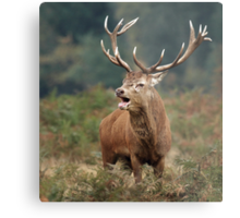Bellowing Red Stag Metal Print