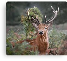 Red Deer Antler Adornment Metal Print