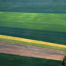 Aerial Abstract by Teresa Zieba