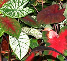 Beautiful leaves by ♥⊱ B. Randi Bailey