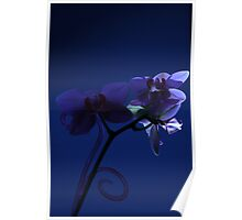 Orchid Moon Poster