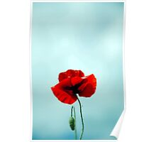 From the Poppy field Poster