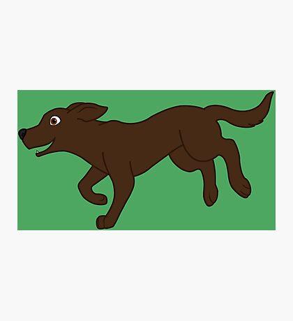 Chocolate Labrador Retriever Running Photographic Print