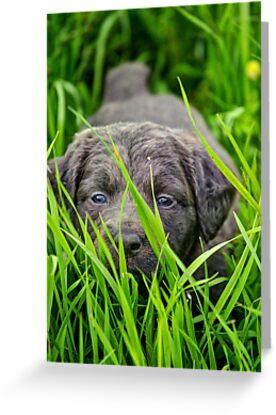 Hiding in the grass by Kristen O'Brian