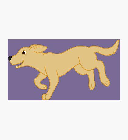Yellow Labrador Retriever Running Photographic Print