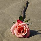 A single rose on the beach by Lisa Kyle Young