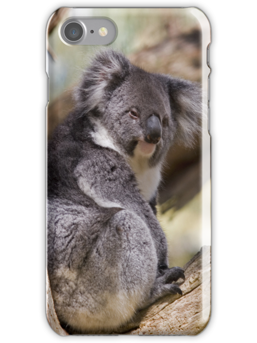Koala in tree by Lisa Kyle Young