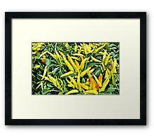 Mild chiles  Framed Print