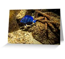 Blue Tang Greeting Card