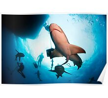 Lemon Sharks Poster