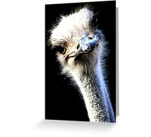 Ostrich Head Portrait Isolated on Black Greeting Card