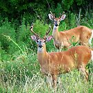 Local Neighbors by Ron Russell