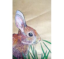 Little Brown Bunny Photographic Print
