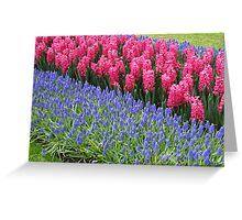 Stunning Pinks and Beautiful Blues - Keukenhof Gardens Greeting Card