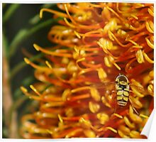 Hover Fly landing. Poster