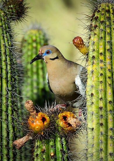 Nature's Nectar  by Saija  Lehtonen