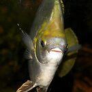 Fish Portrait by photoj