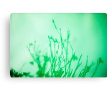 Green with Envy? Canvas Print
