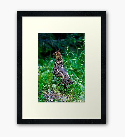 Mamma Partridge Framed Print